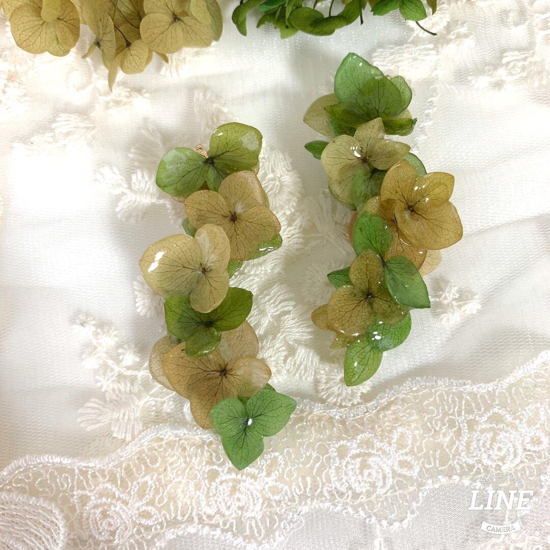 【受注生産】本物のお花 紫陽花のピアスorイヤリング お花のアクセサリー リーフグリーンミックス