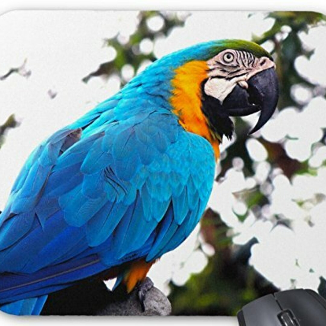 ルリコンゴウインコのマウスパッド 1:フォトパッド( 世界の野鳥シリーズ )