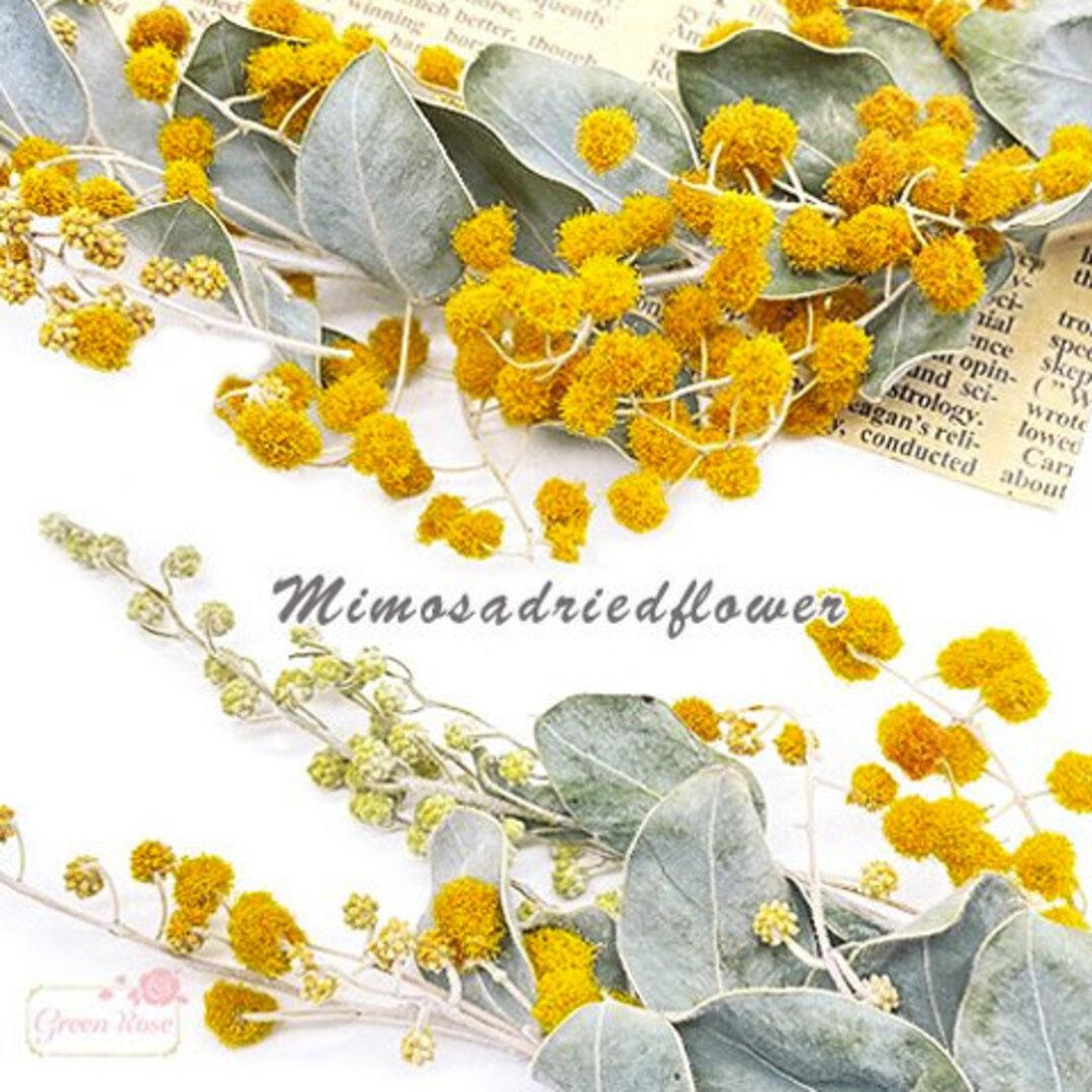 ミモザ アカシア ドライフラワー 黄色 レジン ハーバリウム アクセサリー パーツ 花材 材料 資材 5g f51