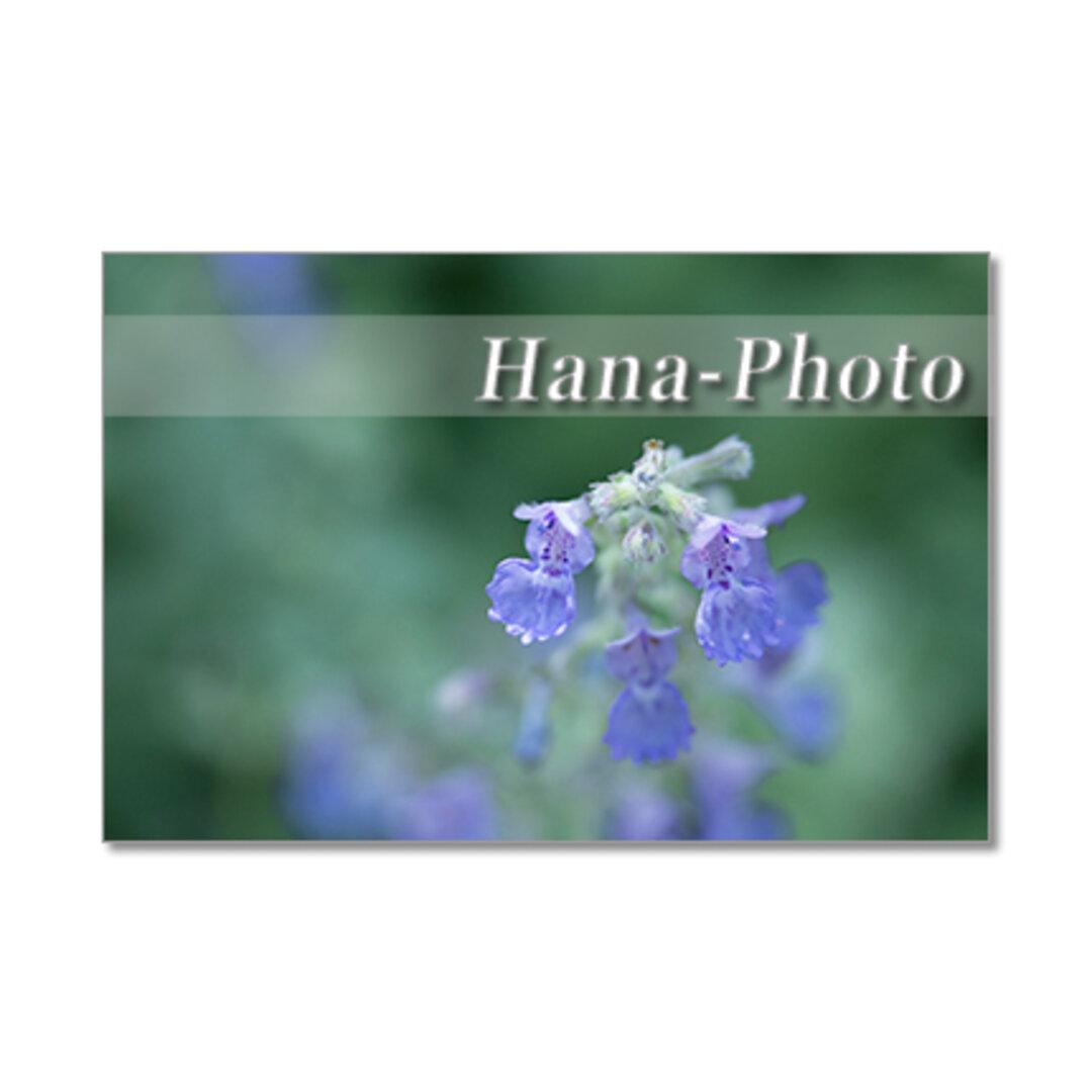 1333) 緑の中の花たち  ポストカード5枚組