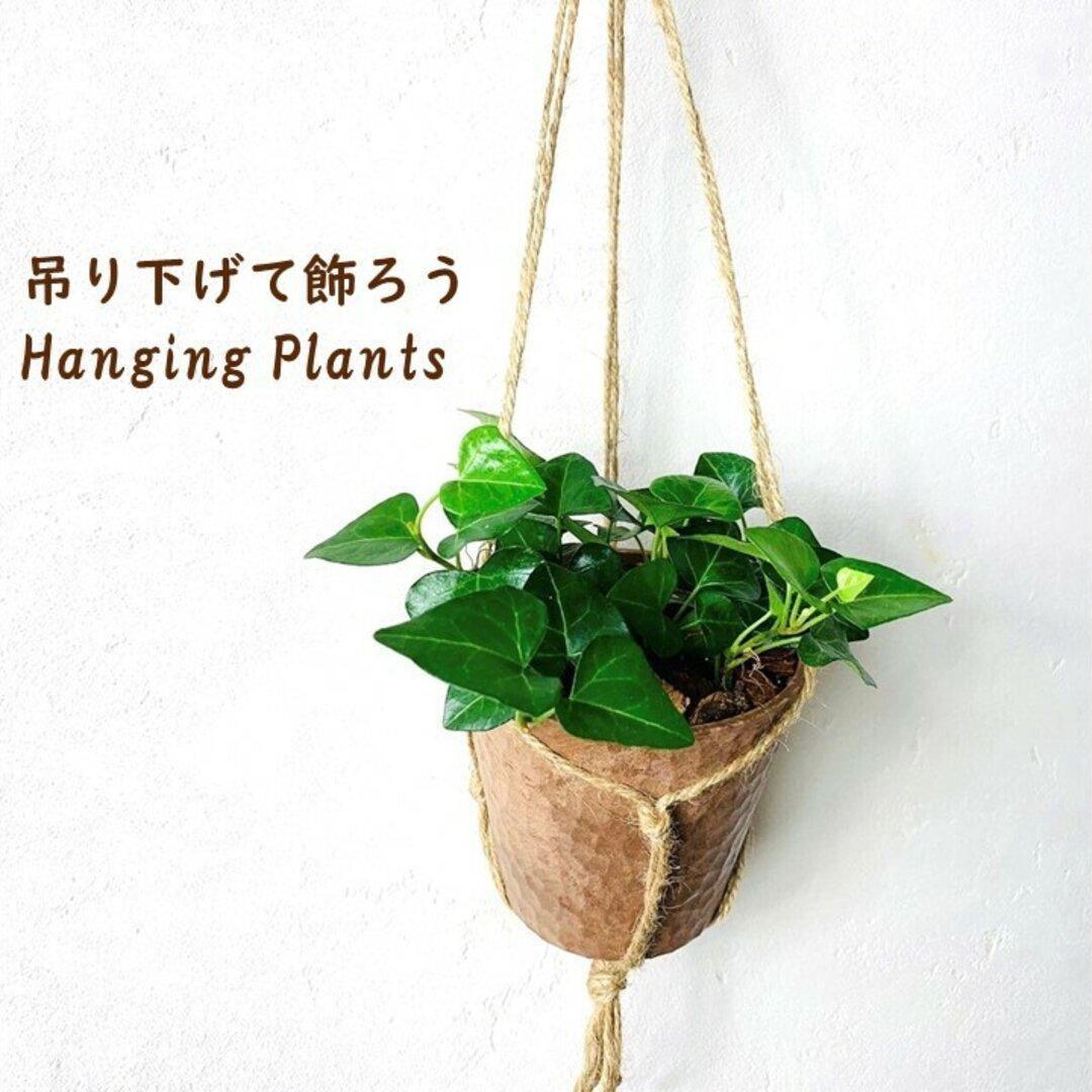 ハートアイビー 木の香りがする ハンギングアロマ鉢 観葉植物 インテリア
