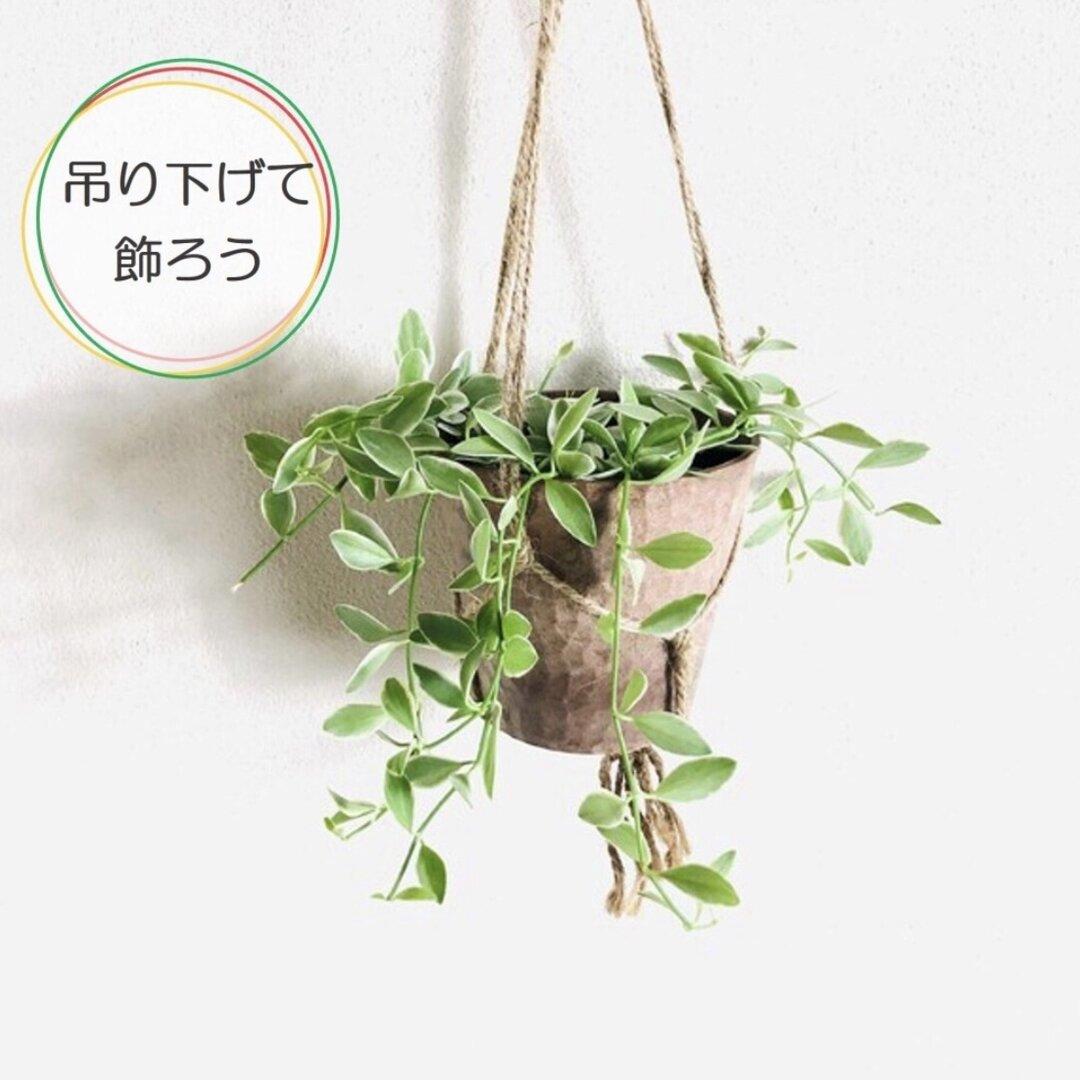 可愛くて育てやすい♡吊るして飾る ディスキディア シュガーエメラルド ハンキングアロマ鉢 壁掛け インテリア 観葉植物