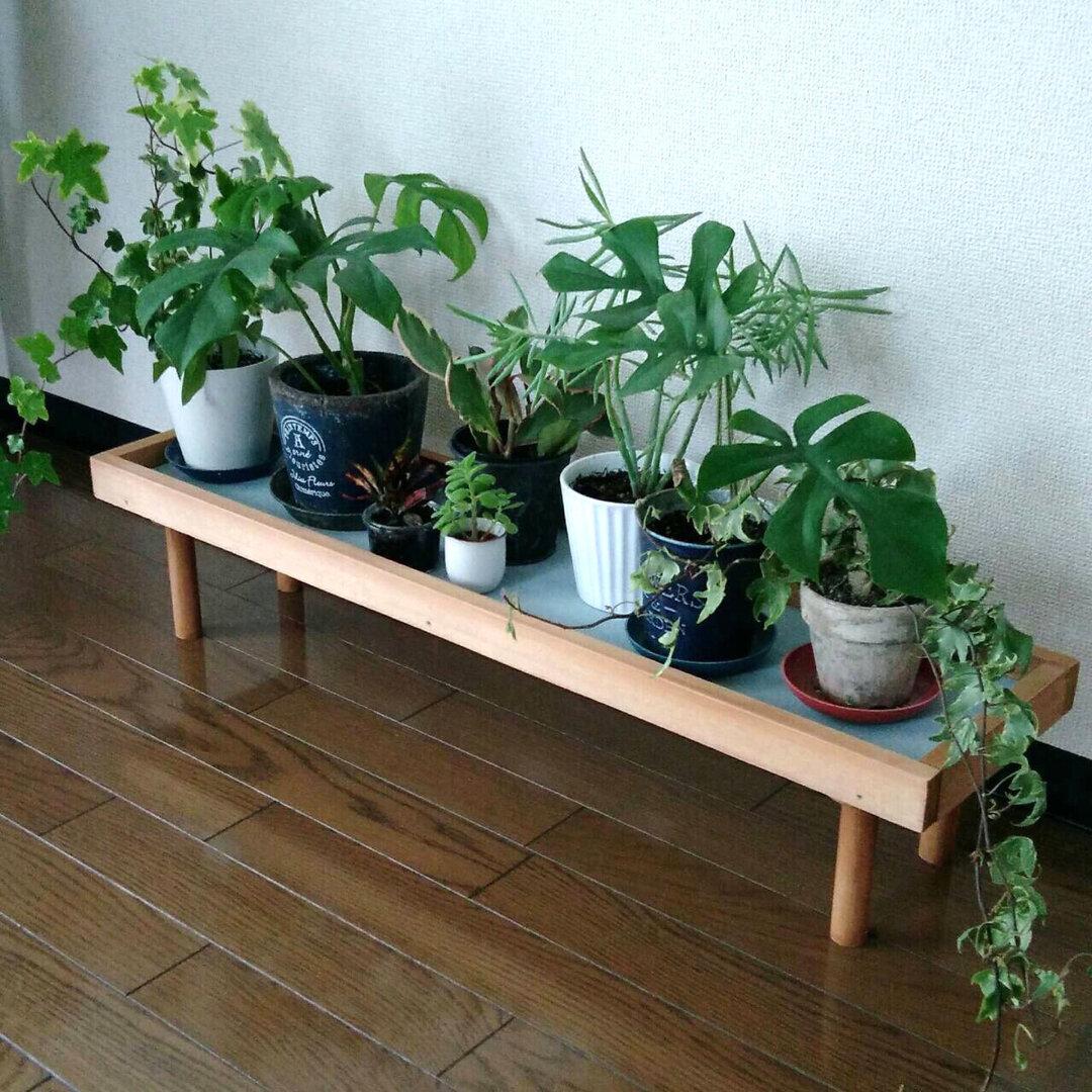 観葉植物ラック 飾り台 (Lサイズ) ガーデニング