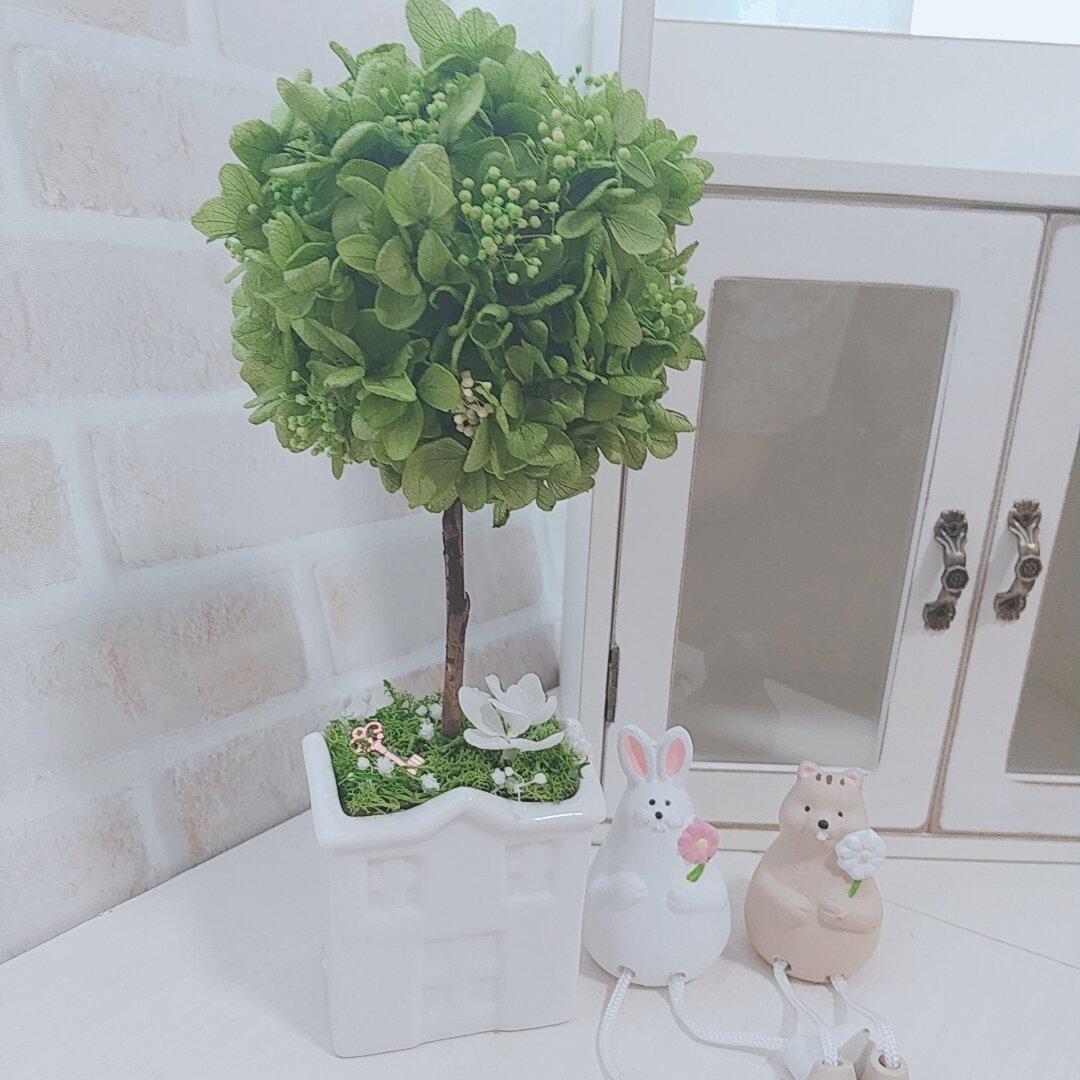 自分だけのお庭作り✨幸せトピアリー