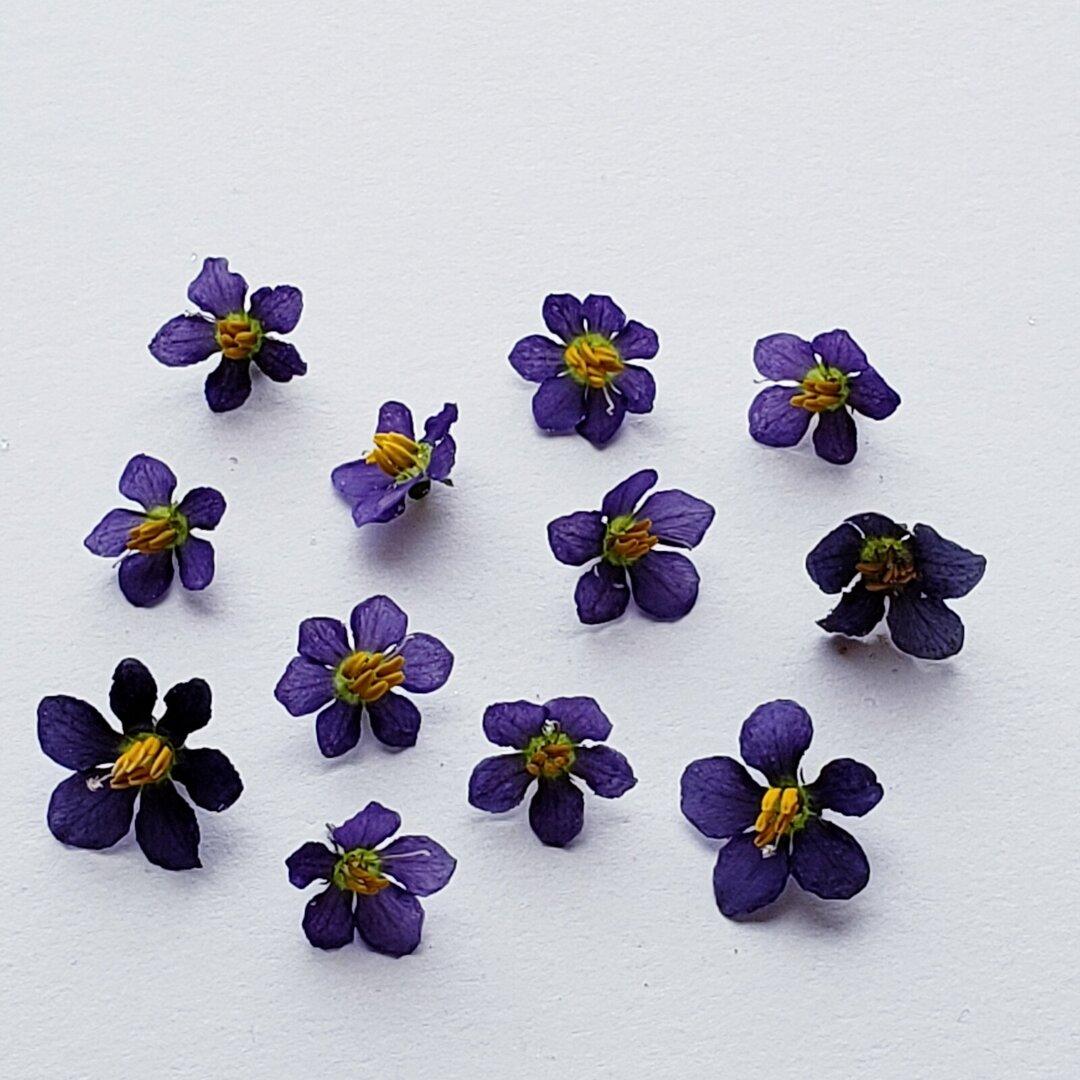 エキザカム 紫のドライフラワー ②