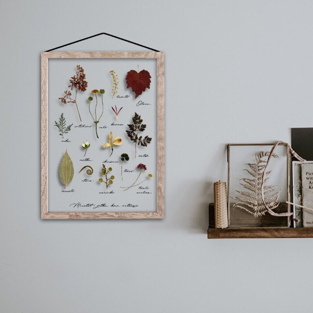 植物採集標本 / C013 / 透明ポスター