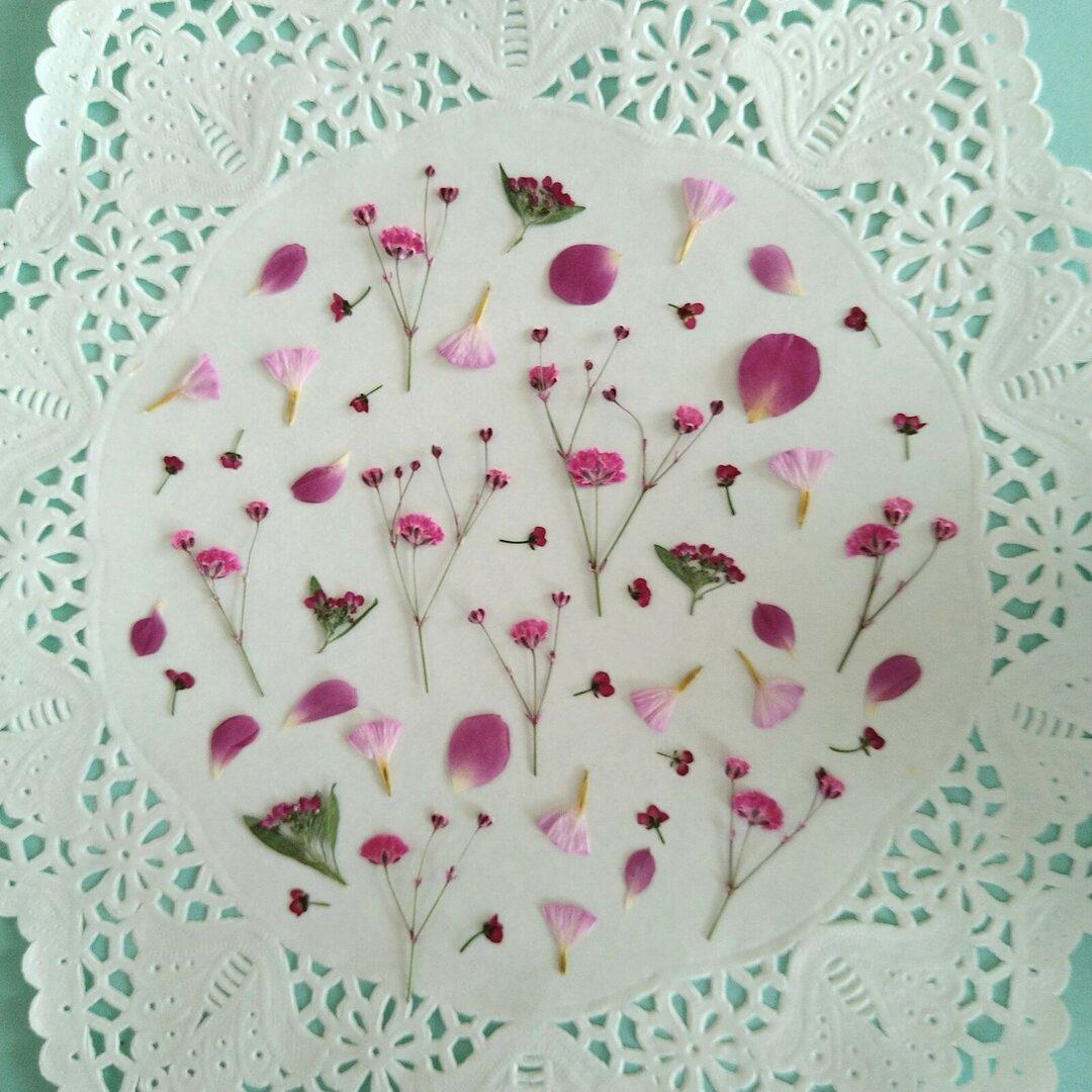押し花素材257 小花のセット