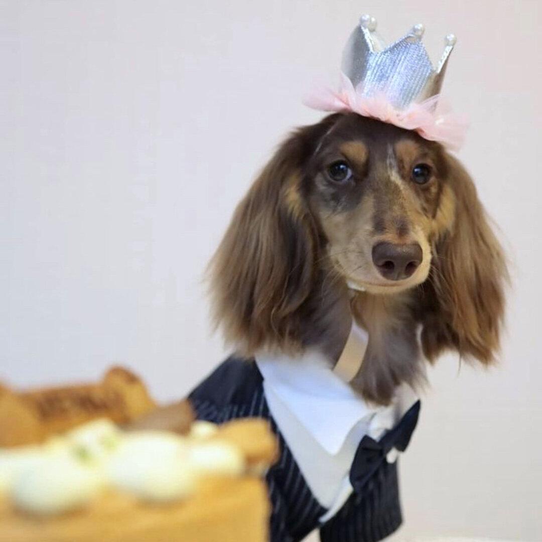 Little princess../人気item‼︎ 大切な記念日や、お誕生日に /犬用アクセサリー /猫ちゃんにも♪