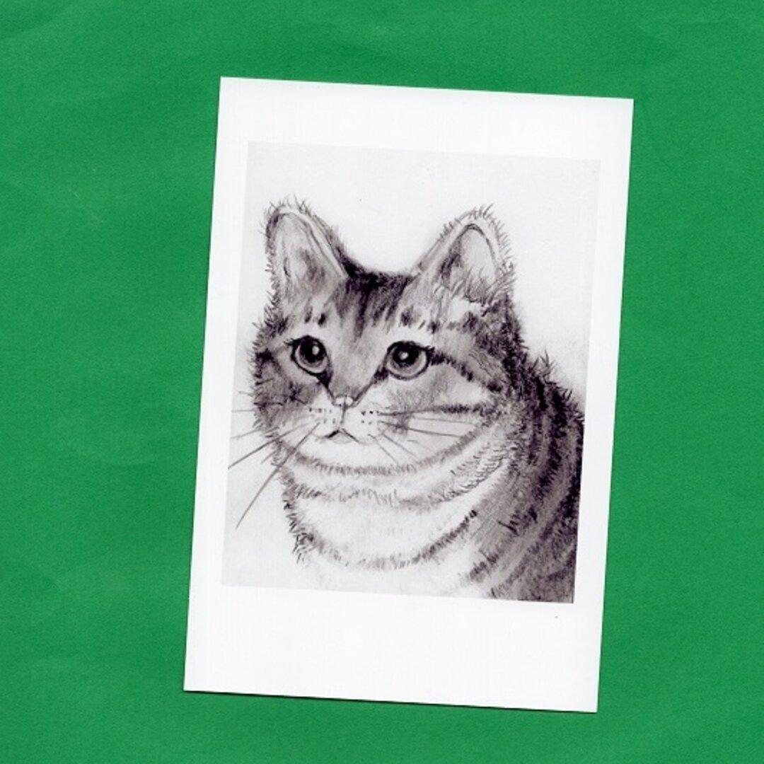 イラスト猫2 ポストカード2 枚