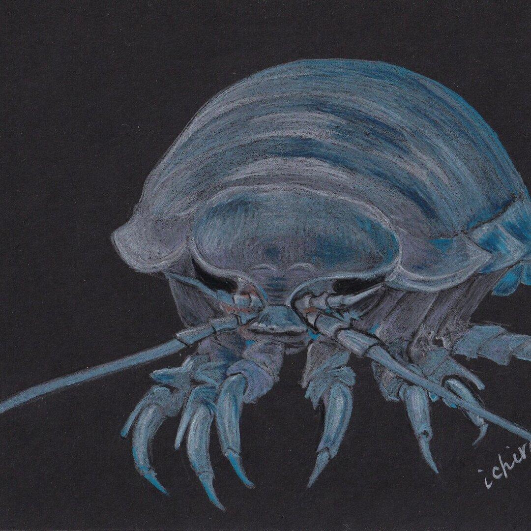 深海生物のポストカード(3枚セット)