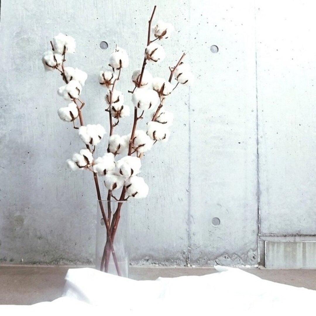 【大人気】癒しのコットンフラワー おしゃれ ディスプレイ 綿の木 ドライフラワー ホワイト花材 インテリア 海外インテリア 韓国インテリア