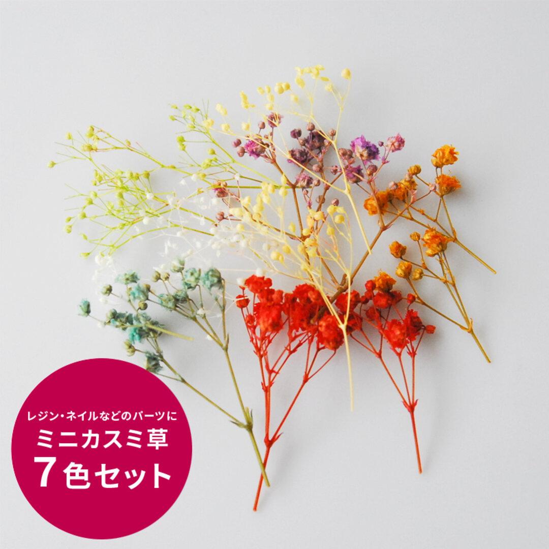かすみ草 ドライフラワー ミニカスミ草7色セット レジン パーツ プリザーブドフラワー 材料 花材