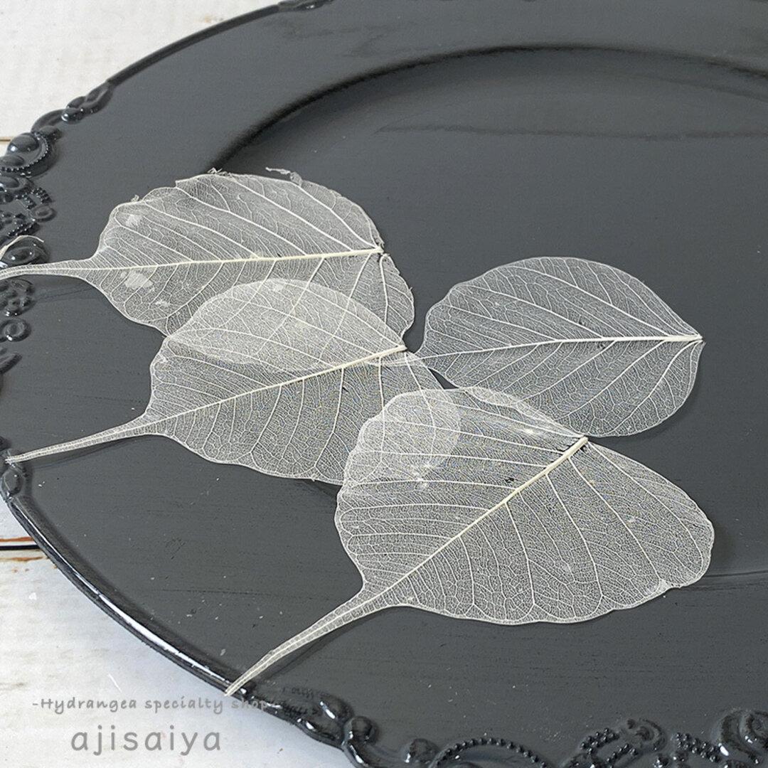 菩提樹の葉 スケルトン 小 【7枚入】