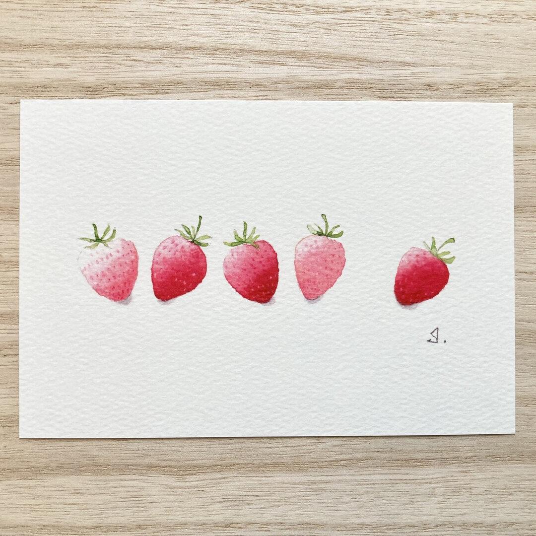 🍓透明水彩画「いちごコロコロ」イラストポストカード2枚セット フルーツ 苺 イチゴ 🍓