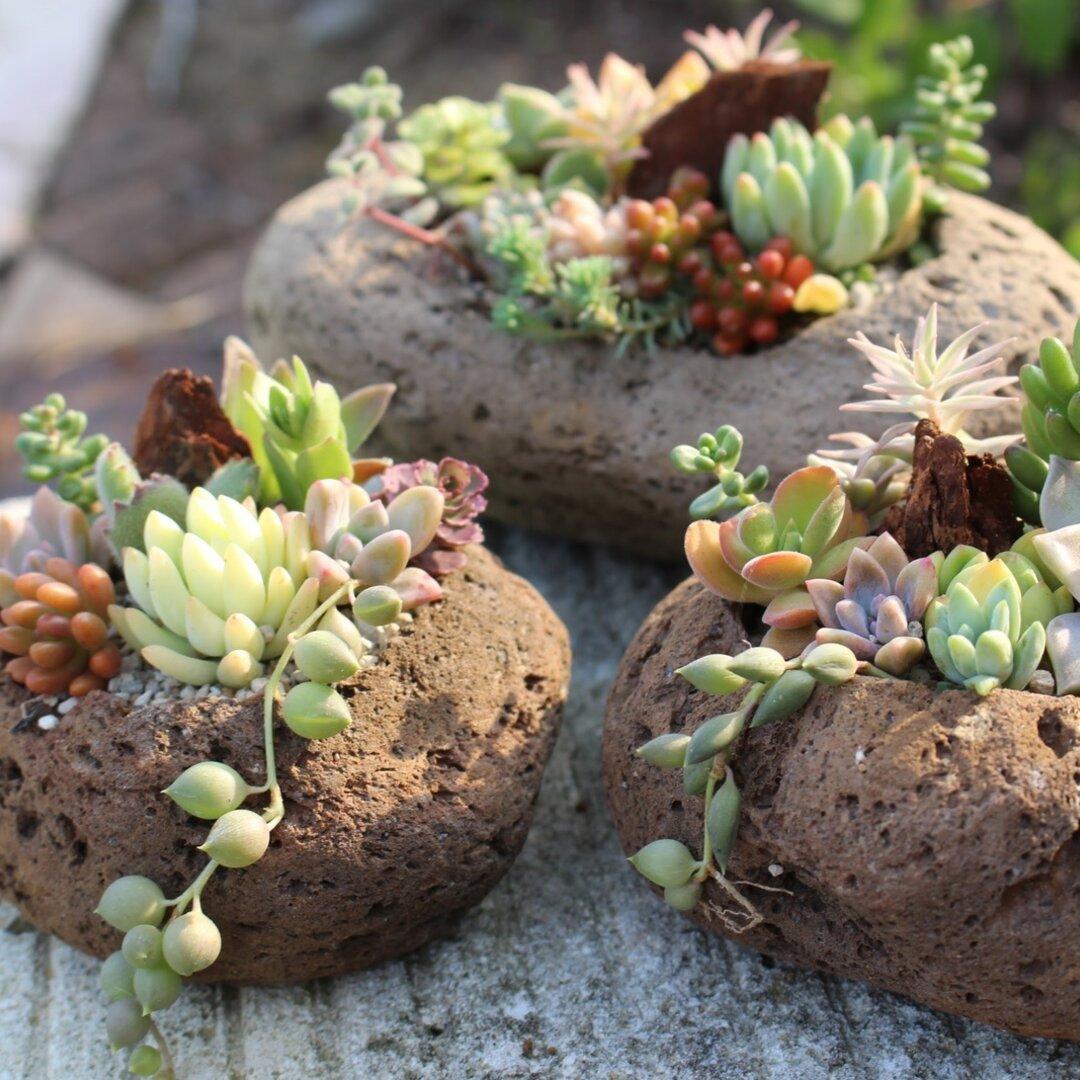 🆕【特集掲載】溶岩軽石の多肉植物の寄せ植え(中または大)