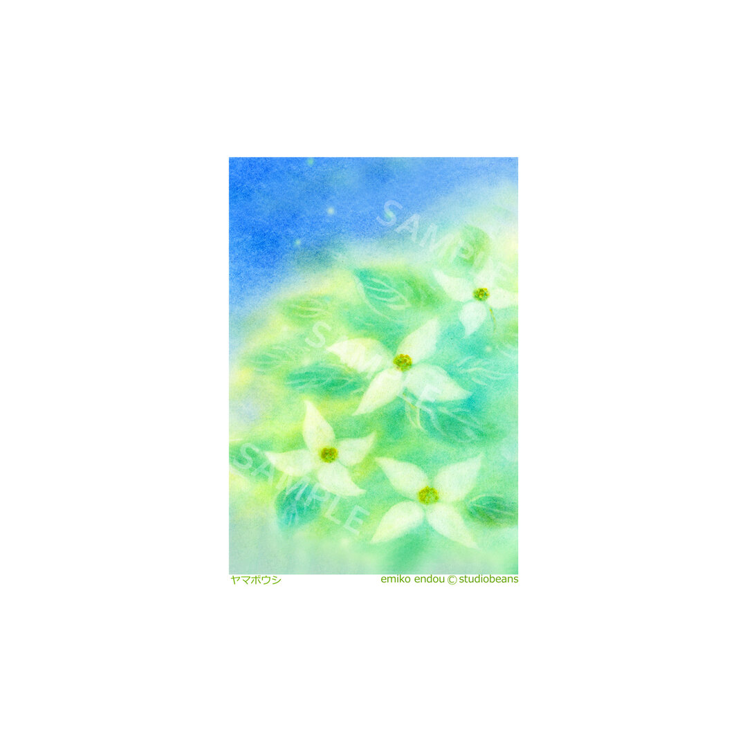 【選べるポストカード5枚セット】No.13 ヤマボウシ