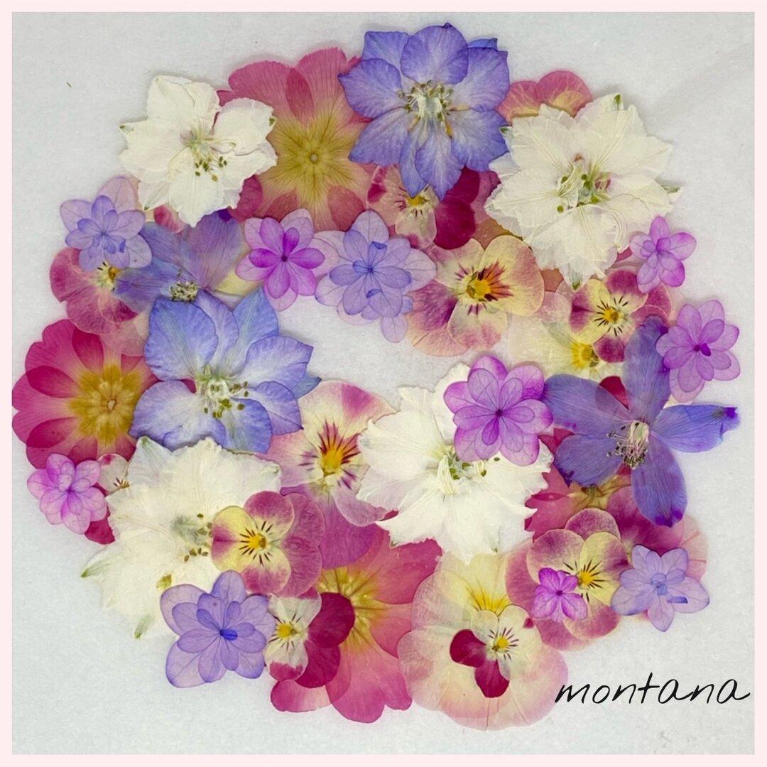 626.押し花アソート〜カラフル お花 mix 押し花素材