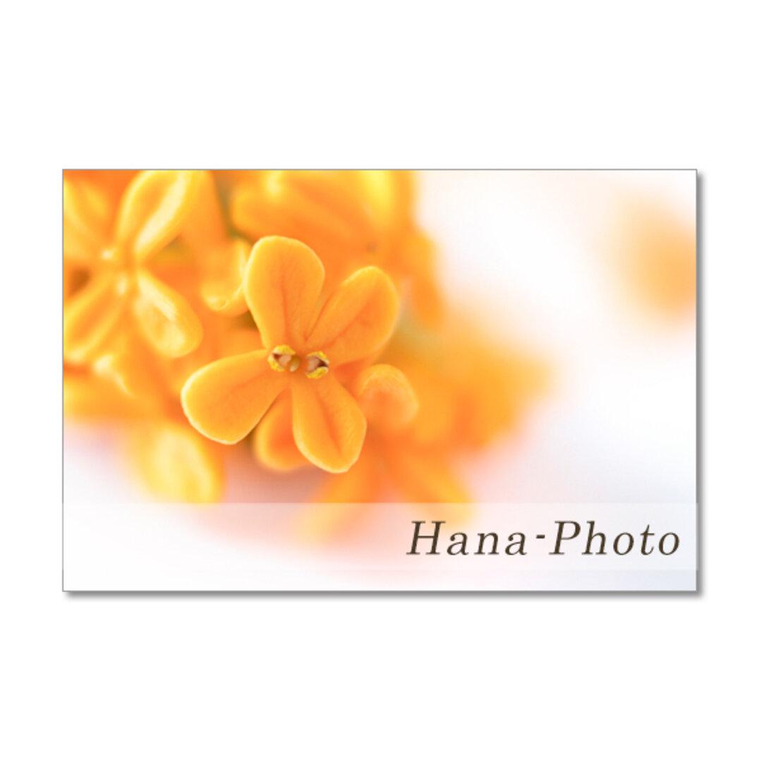 1494) 香るキンモクセイとお茶の花  ポストカード5枚組