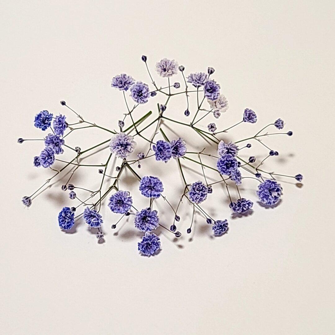 霞み草のドライフラワー ラベンダー 枝