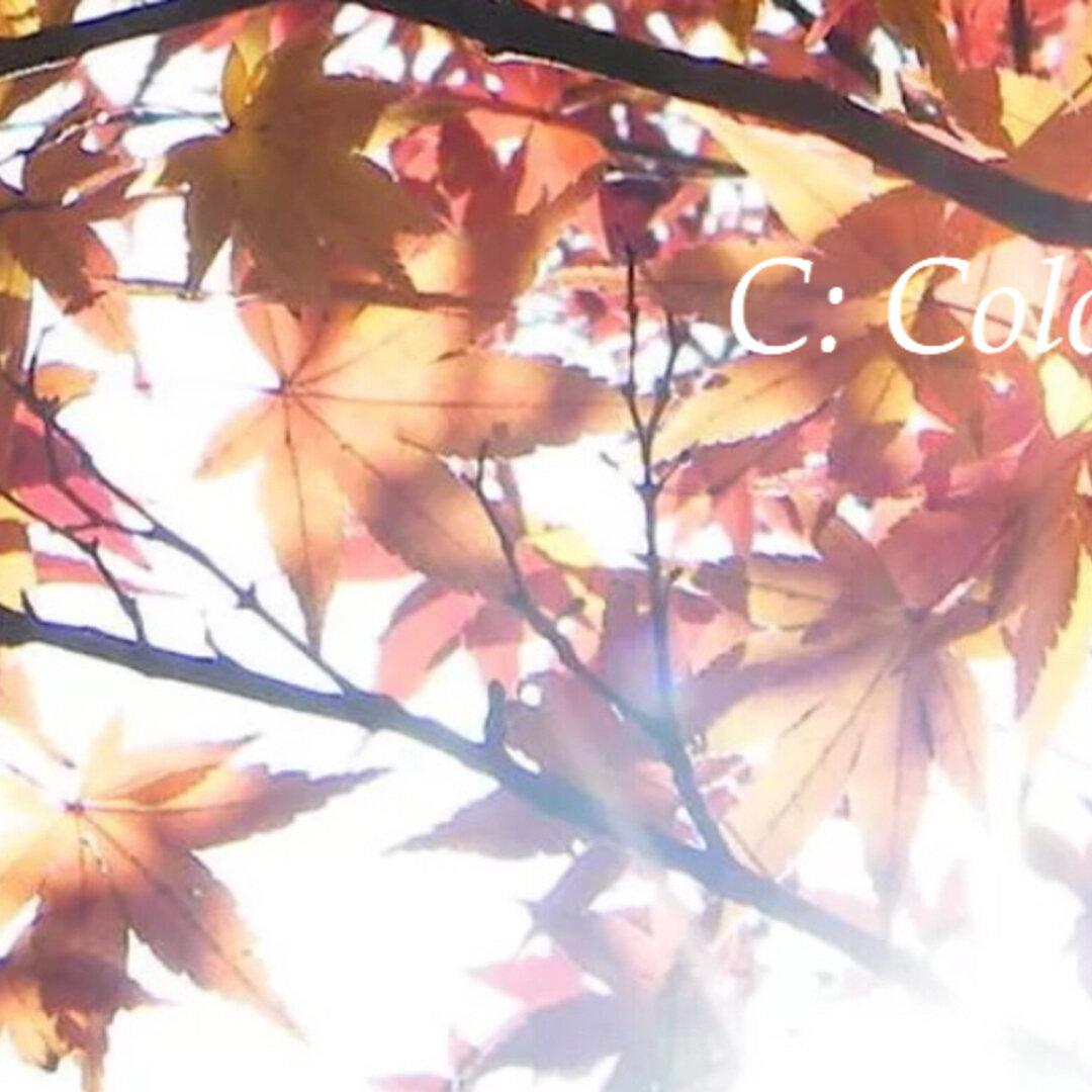 【送料無料】紅葉と光 アート写真