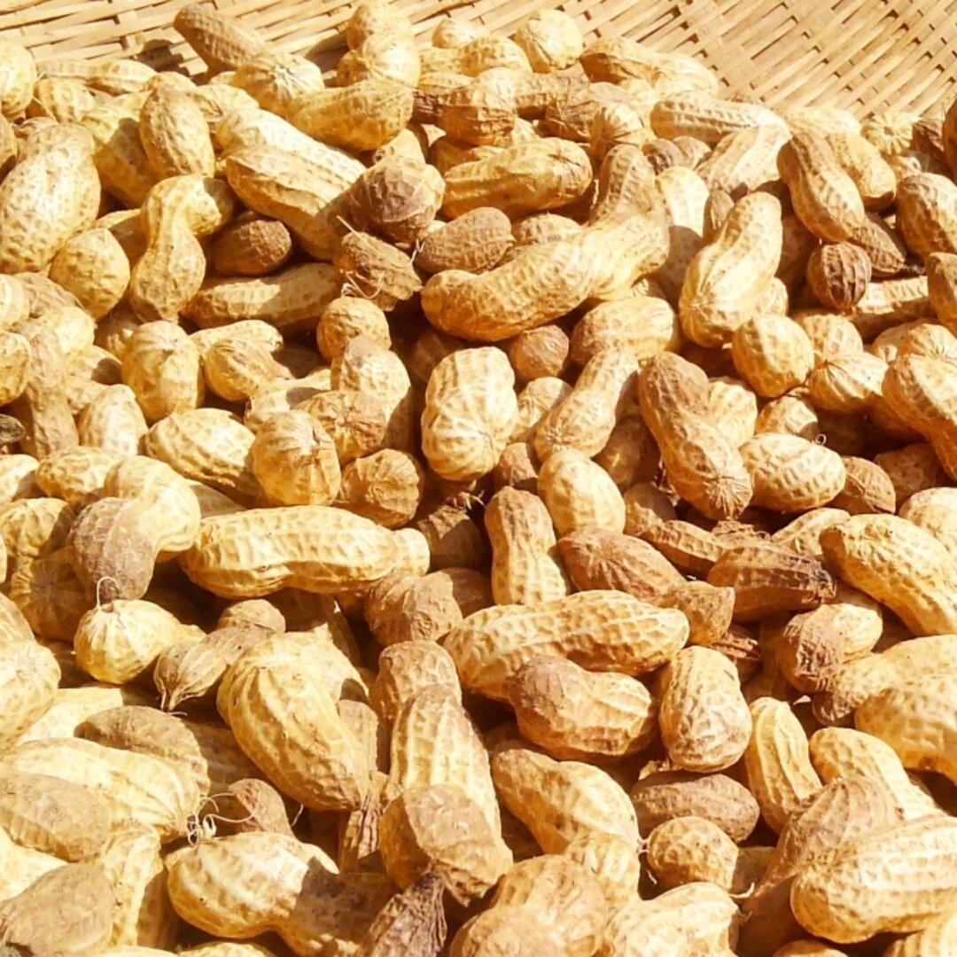 自家農園産ピーナッツ500g