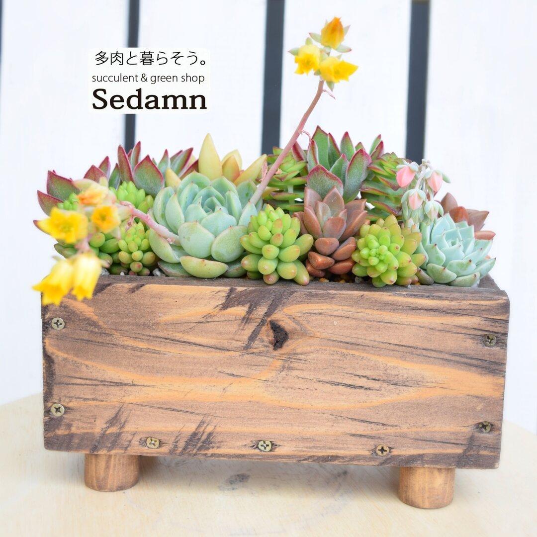 『多肉植物の小さな花壇】ヴィテージハーフ