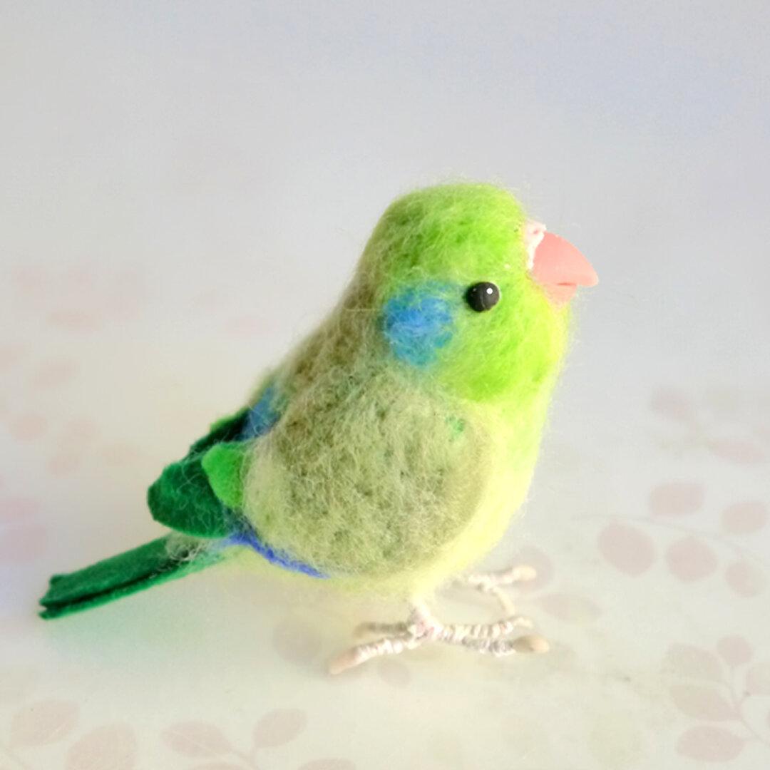 オーダーメイドの小鳥(マメルリハ 1羽)