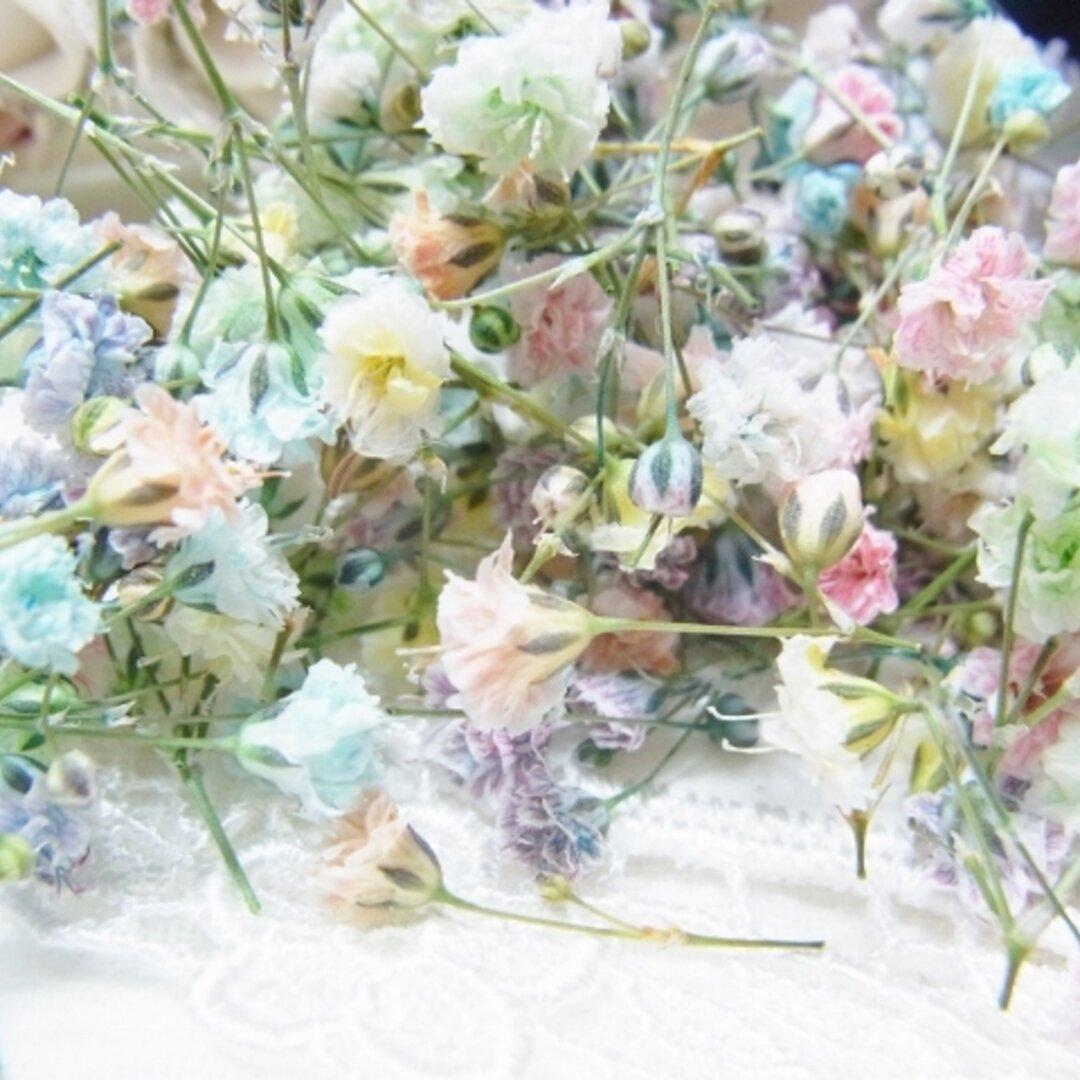 花材 ドライフラワー かすみ草 ミックス
