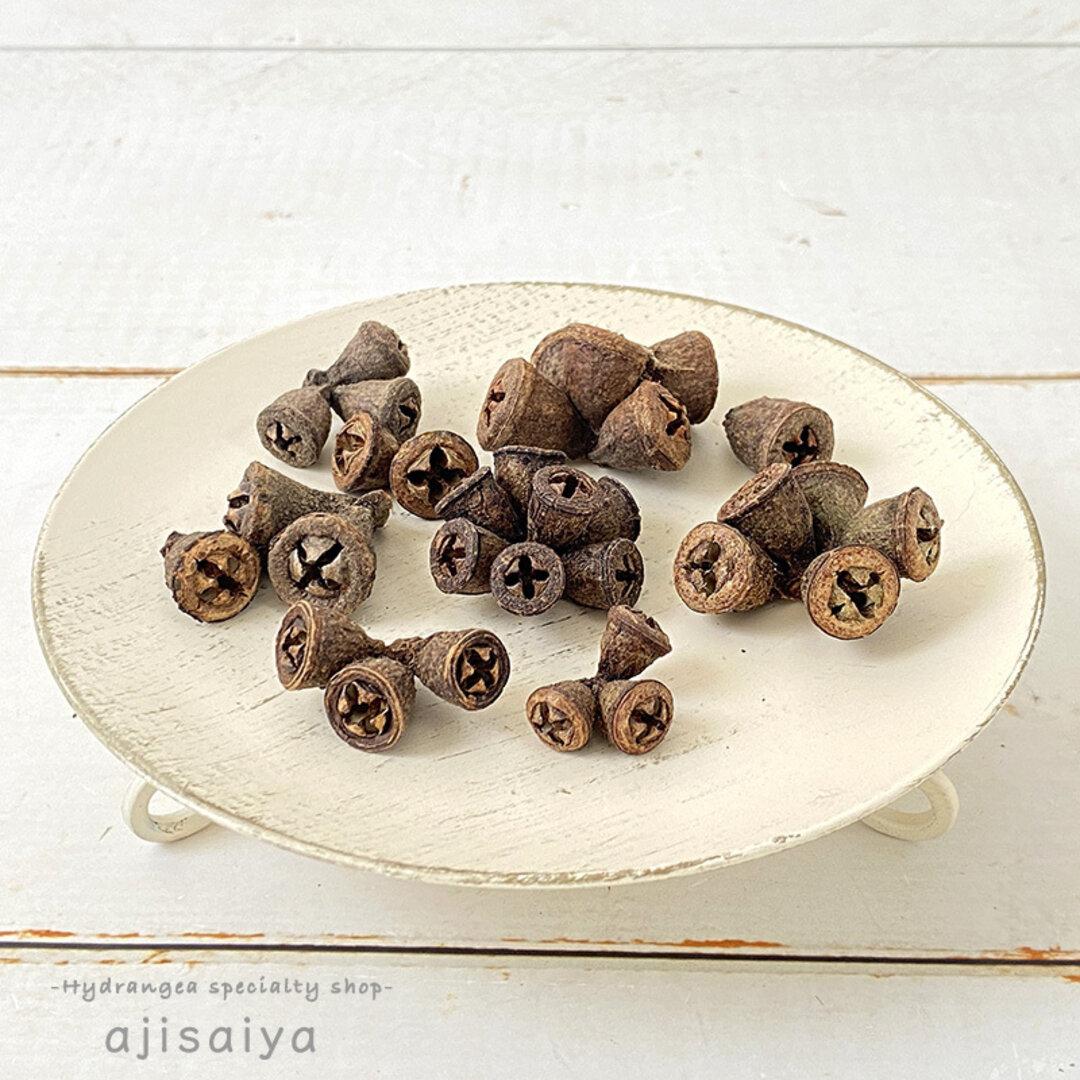 ユーカリの実 コニカルガムナッツ 【ナチュラル】 木の実