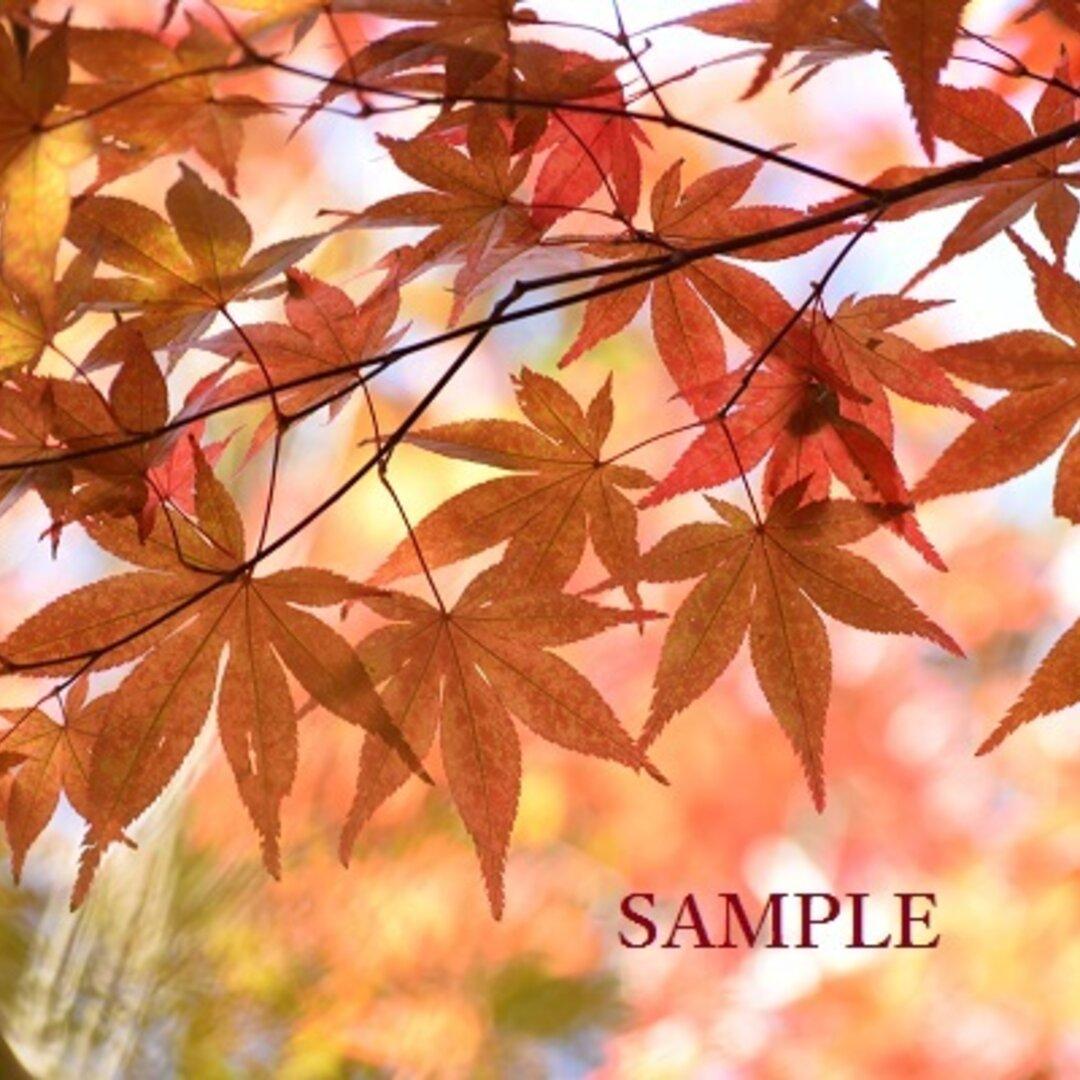 040)秋を彩るカラフルな紅葉 ポストカード5枚組