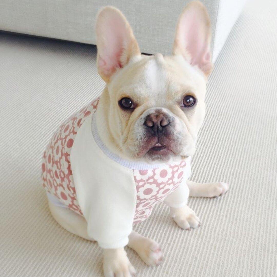 犬服オーダー★北欧花柄Tシャツ中型犬小型犬フレンチブルドッグパグフレブル服