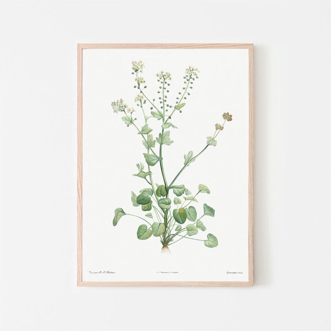 トモシリソウ / アートポスター イラスト ミニマル 植物 花 フラワー グリーン 2L〜