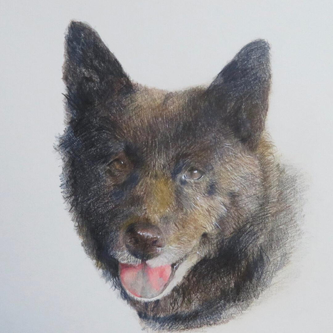 色鉛筆で描くペット、人物の肖像画(A4)