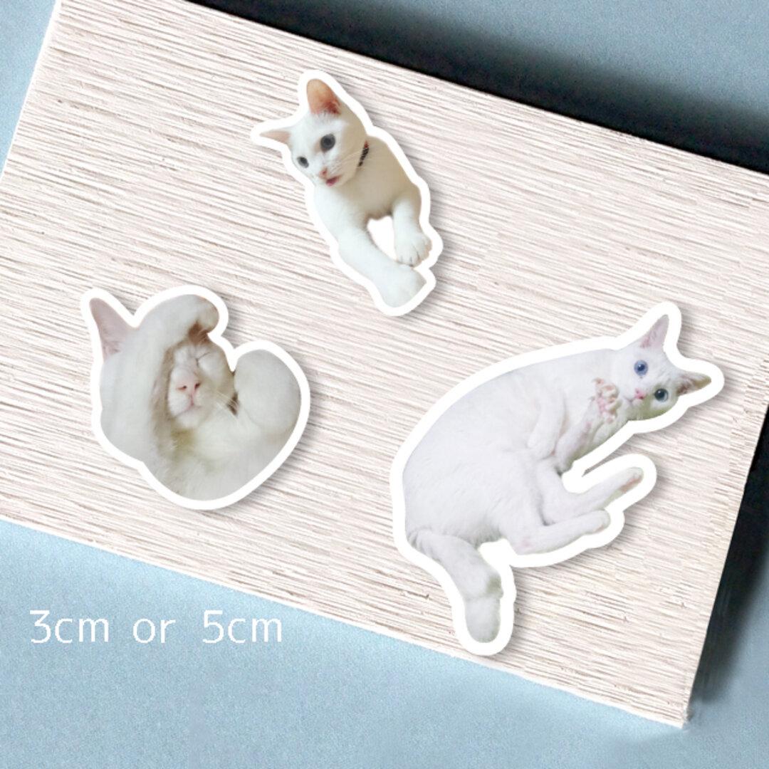 うちの子愛犬愛猫シール:最高4種類まで 3cm or 5cm