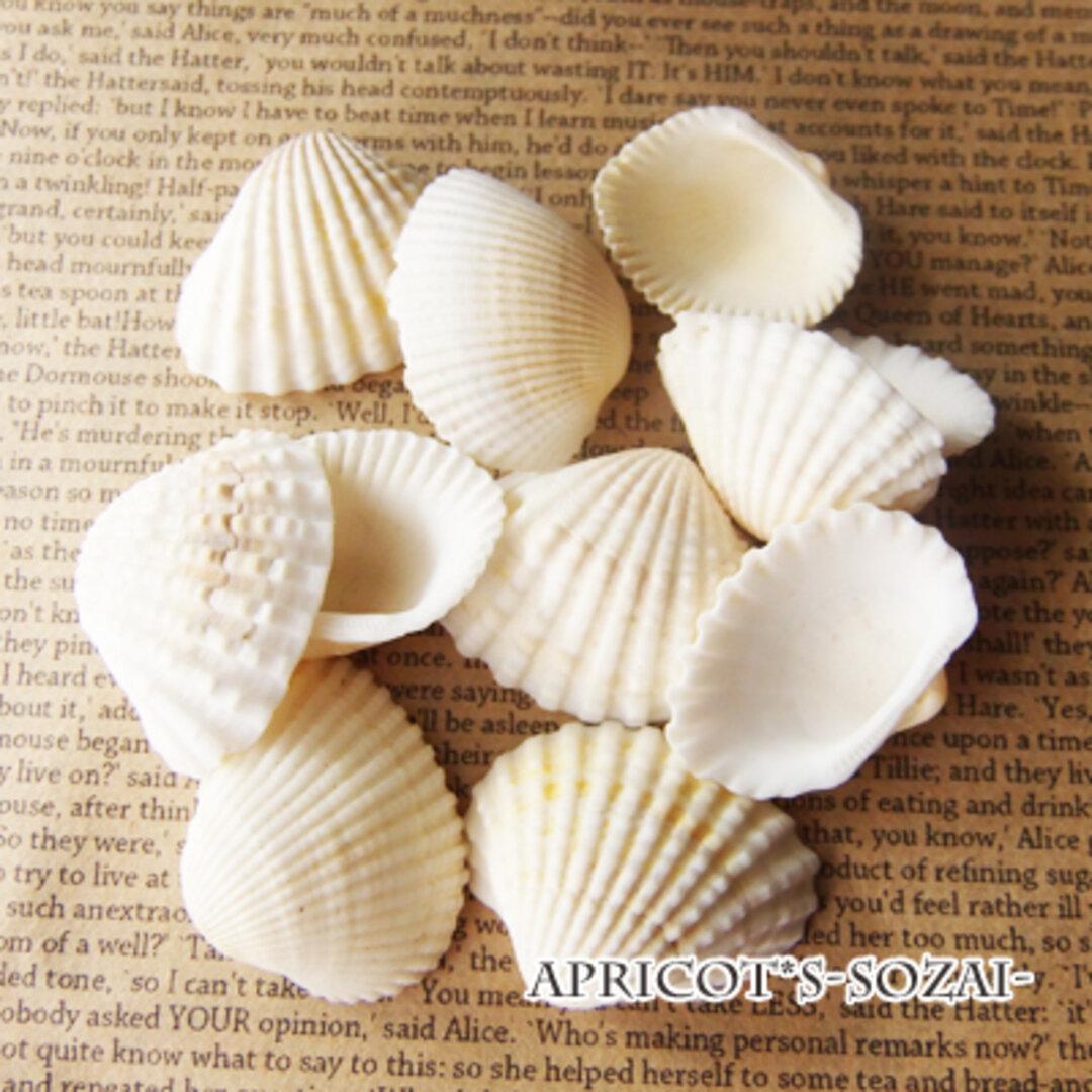 【おまかせ10個】 貝殻 大きさ 中型 インテリア 天然素材 アクアリウム 貝 マリン サマー 夏 ジオラマ