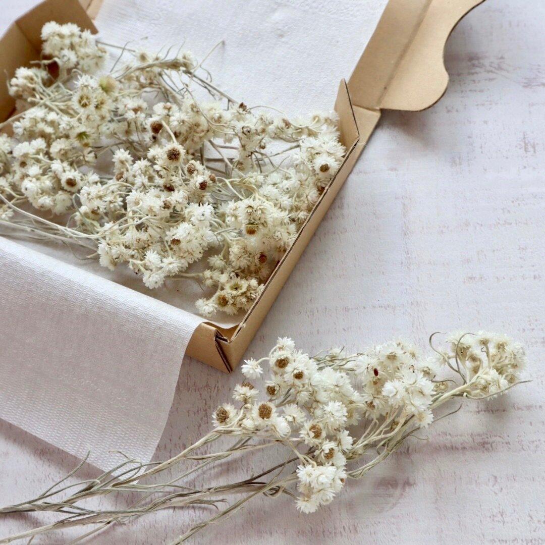白い小さな小花  母子草(ハハコグサ)の花材セット