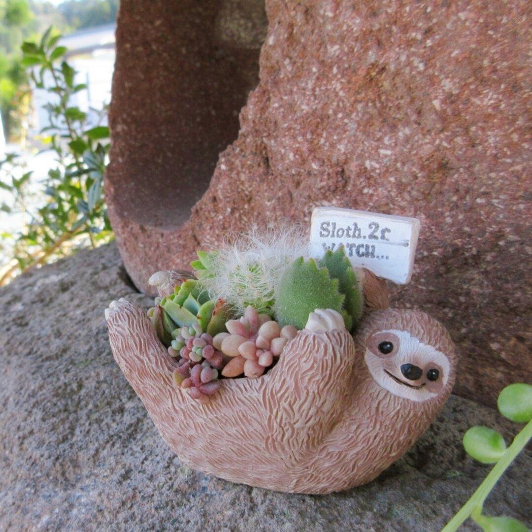 🆕再販!!大人気♡ゴロンとナマケモノちゃんの寄せ植え🦥(多肉植物のキュンする寄せ植え)