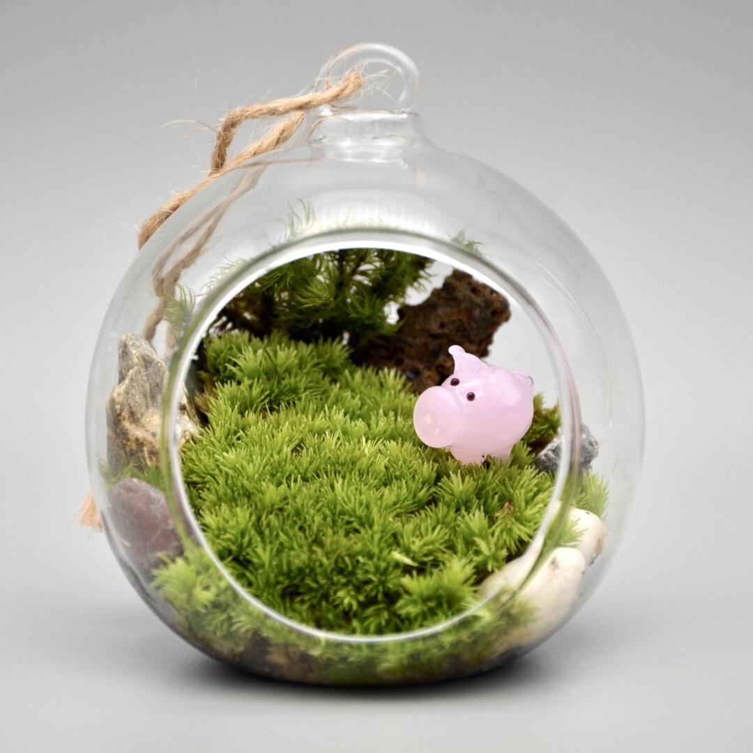 苔テラリウム★豚さん🐷★完成品★