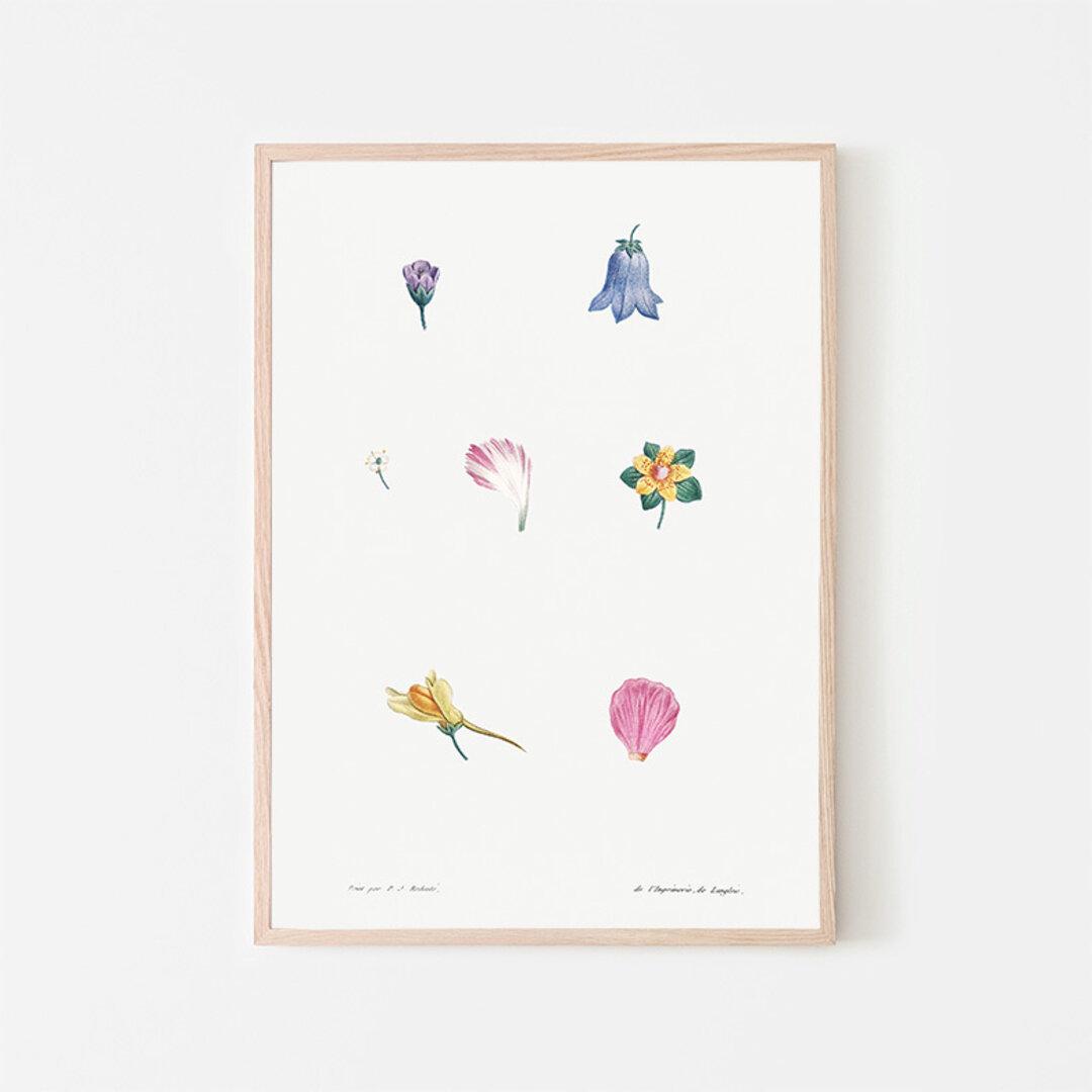 フラワーセット / アートポスター イラスト ミニマル 植物 花 フラワー カラフル 2L〜 ピンク ブルー