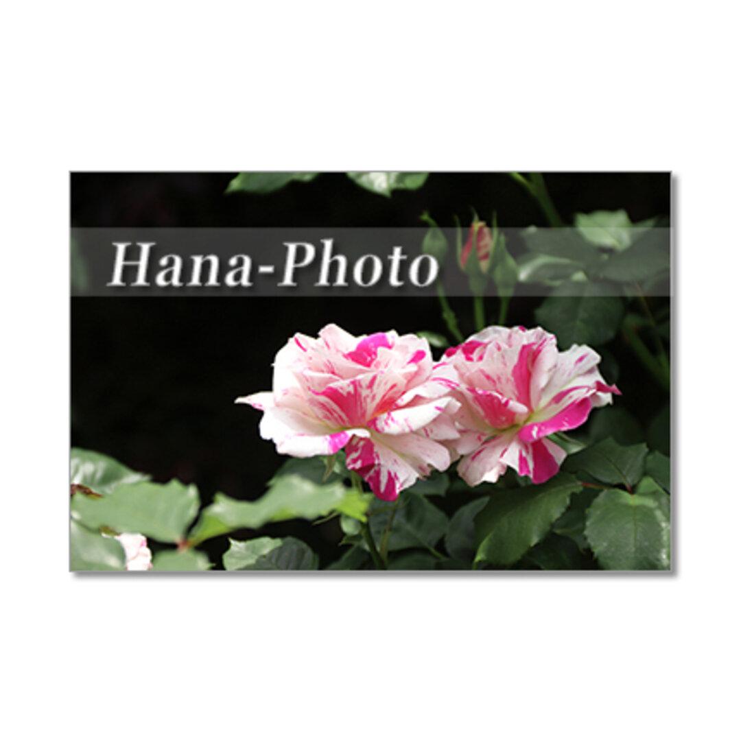 1350) 大人色のシックなバラたち ポストカード5枚組