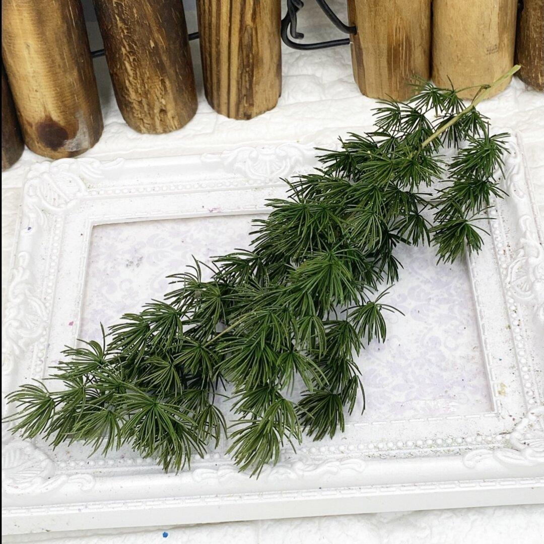 人気花材❣️ミリオクラダスグリーンキラキラゴールドラメ付き小分け❣️ハンドメイド花材プリザーブドフラワー