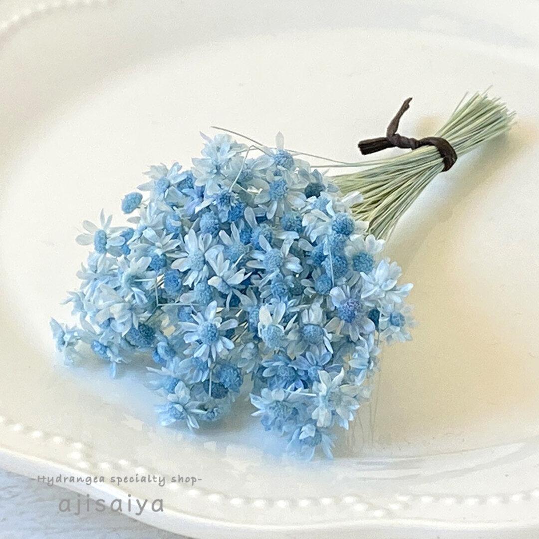 パステル花材 ベビーブルー <スターフラワーミニ> カラードライフラワー