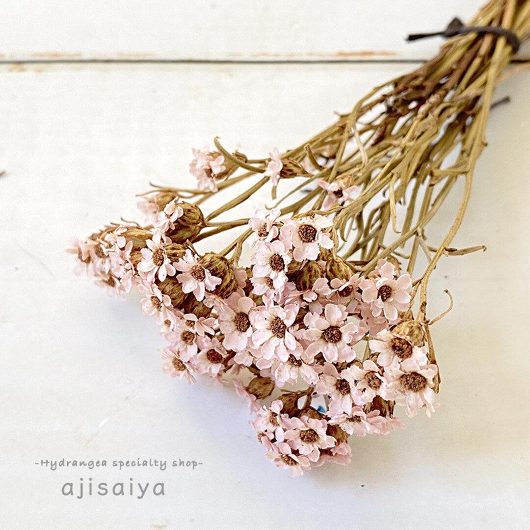 SAデージー・ミニ ピンク ドライフラワー