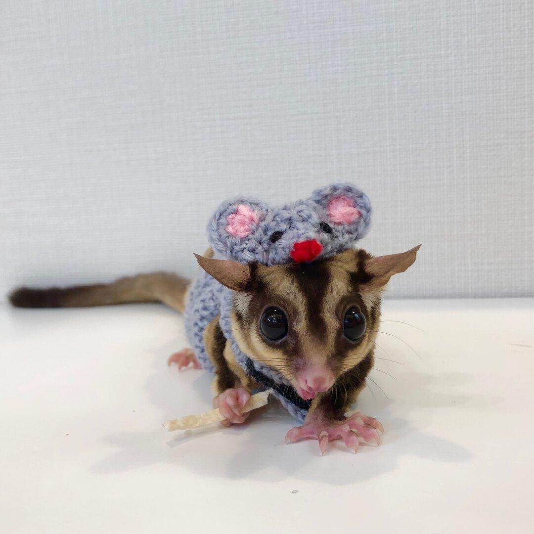 ネズミの着ぐるみ(モモンガ)