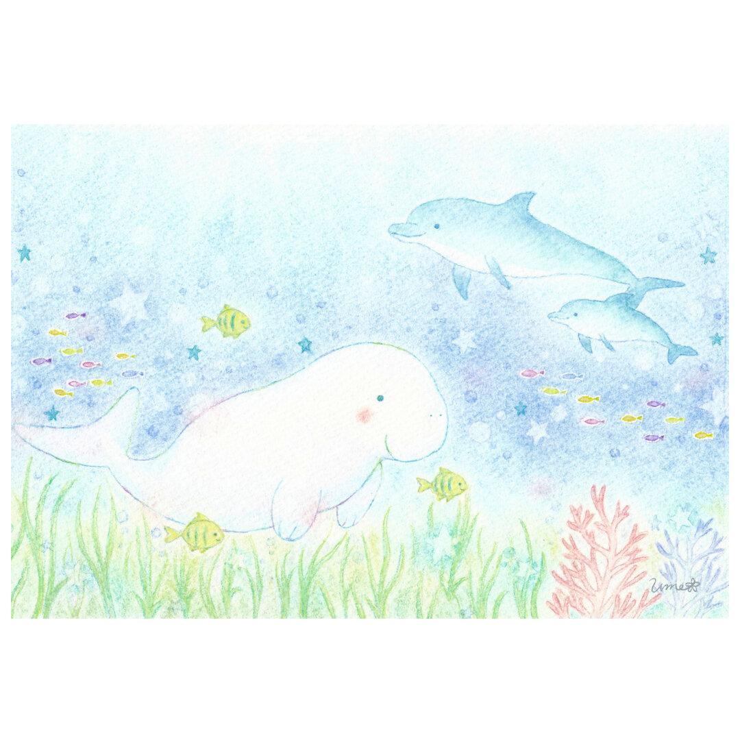 *ジュゴンとイルカとお魚たち* 選べるイラストポストカード2枚組セット No.15