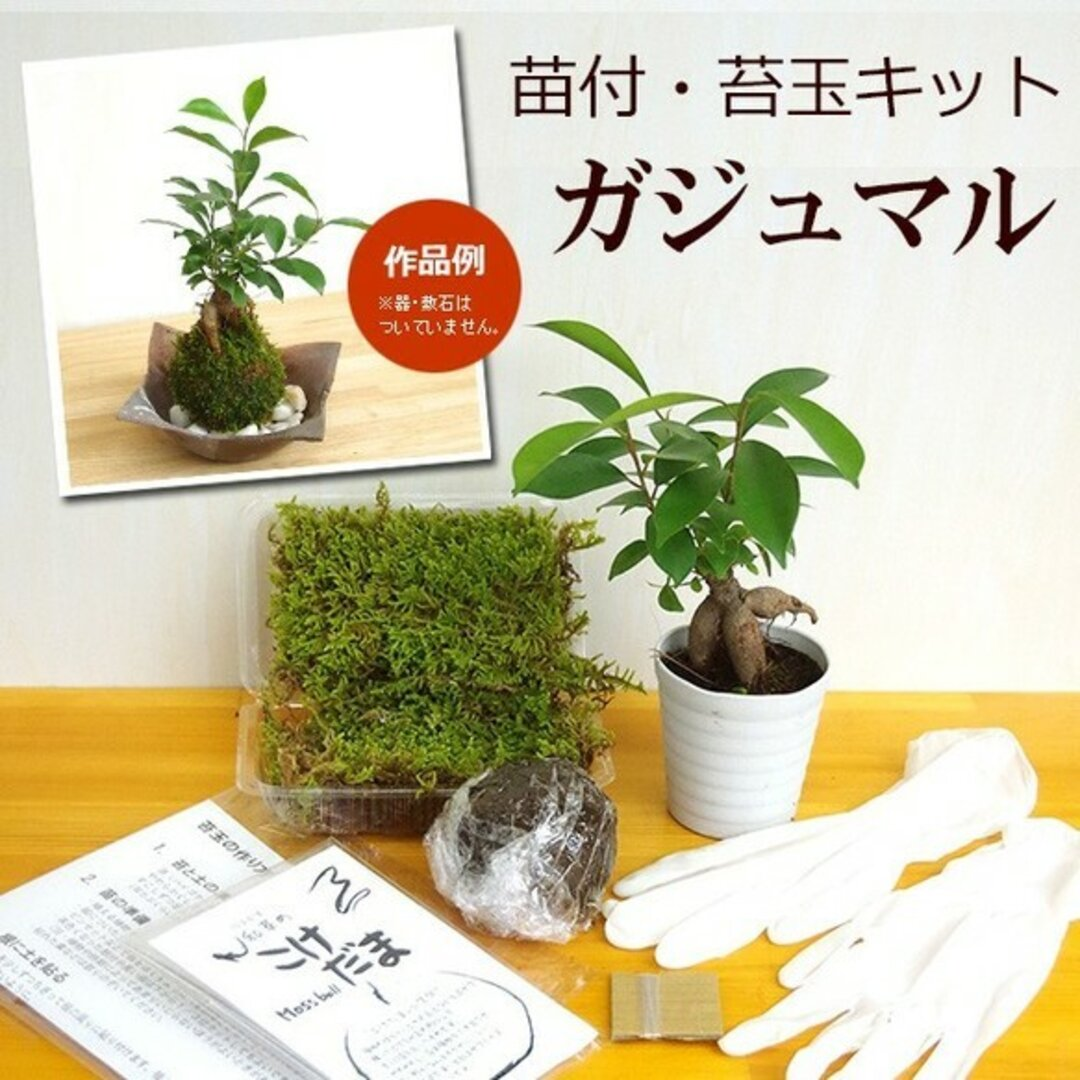 ご自宅で苔玉を作ってみませんか?【苔玉キット 苗付(ガジュマル)手袋付き】
