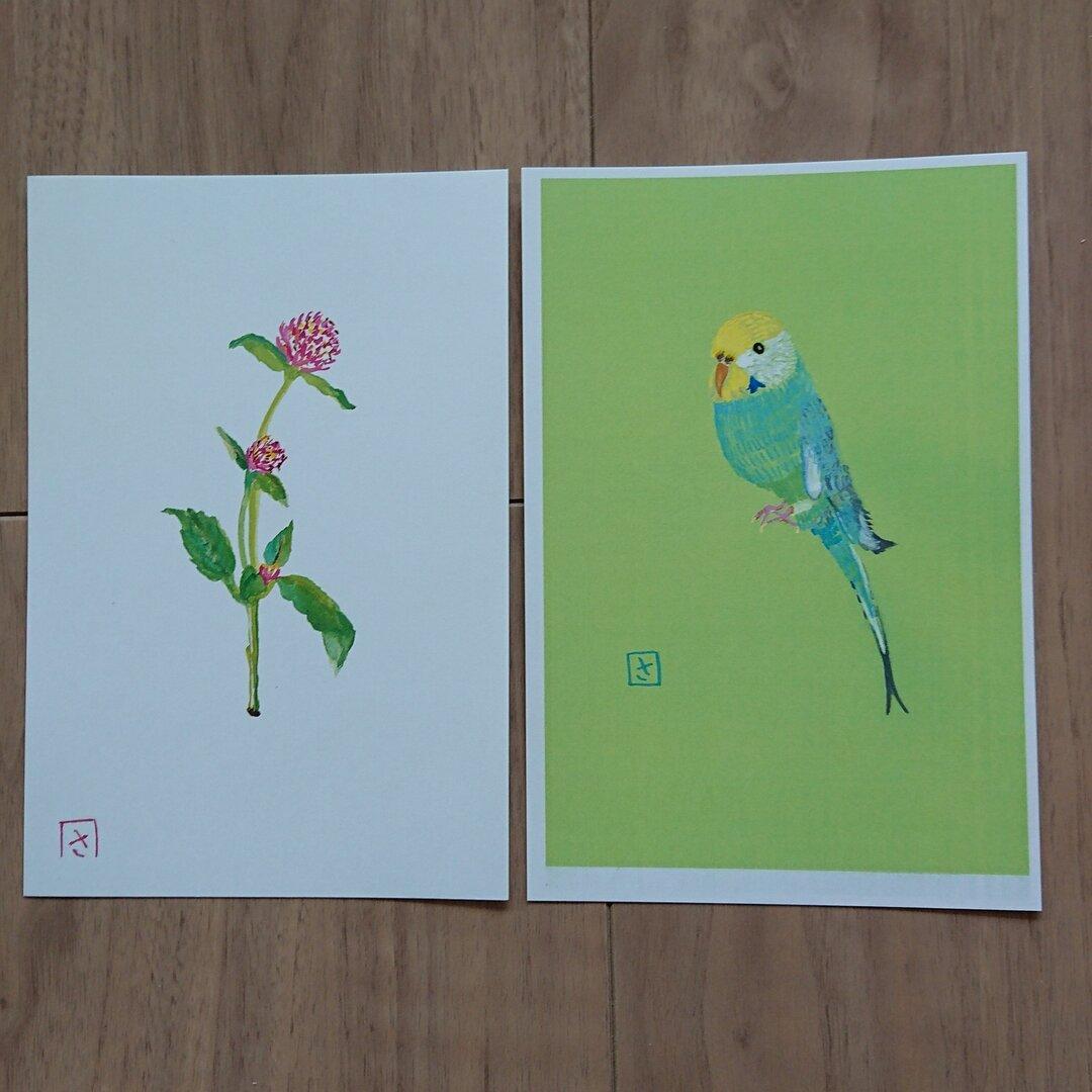 季節の絵はがき(ポストカード)インコと①お花