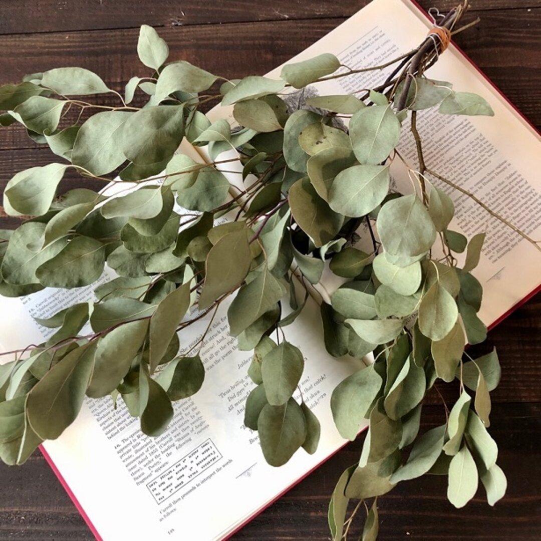 ユーカリポポラス6本セット ユーカリのシンプルスワッグ秋冬収穫 素材用にも ドライフラワー 花材