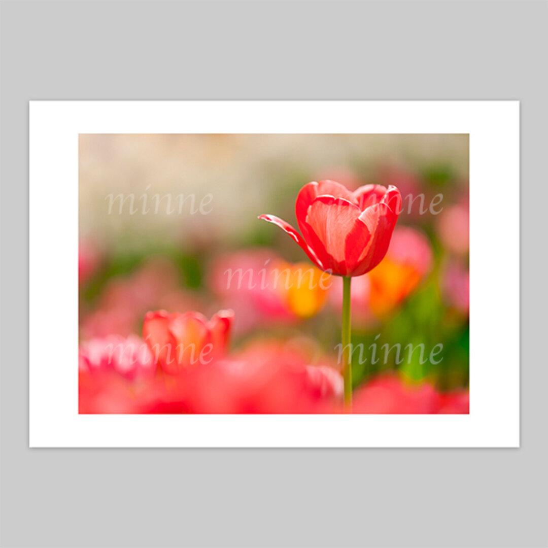 花の写真(A3)の1点セレクト 送料無料