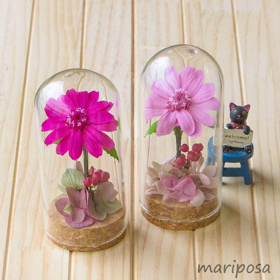 【新作】コスモスピンクのグラスドームフラワー ~ エアフルールフラワーギフト ~ 空気でお花を優しく包んだフラワーギフト